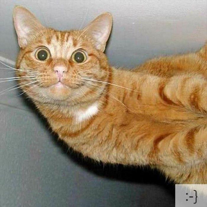 5f1a703fc393e95c9d89bc389833df0e--funny-cat-faces-emoticon
