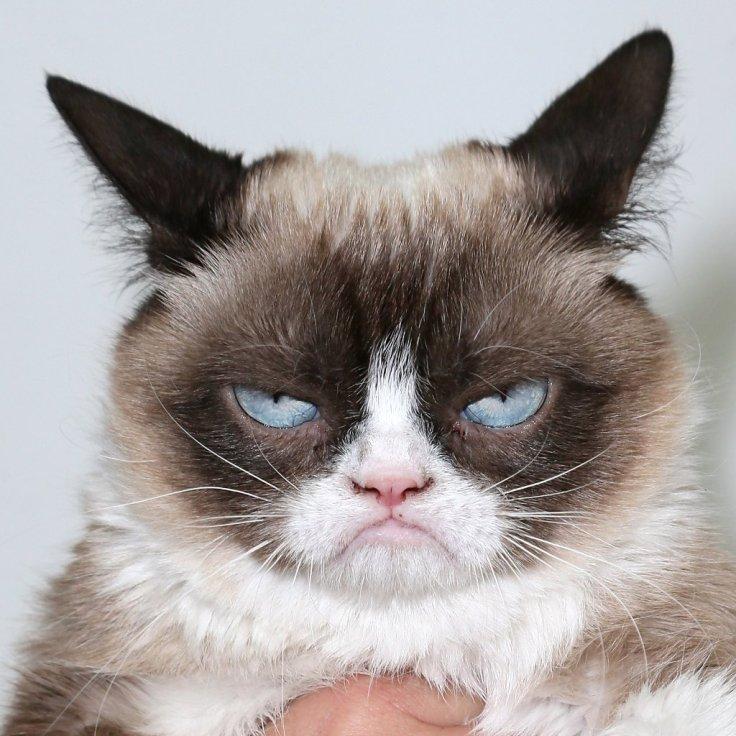 Funny-Cat-GIFs.jpg
