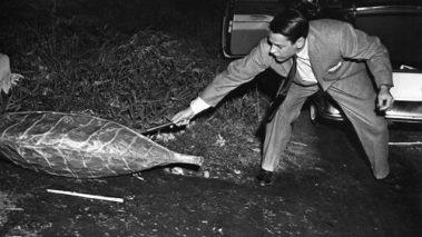 Linvasione-degli-ultracorpi-Invasion-of-the-Body-Snatchers-1956-1957
